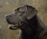 Black Lab 19 Fine Art Print