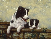 Border Collie 15 Fine Art Print