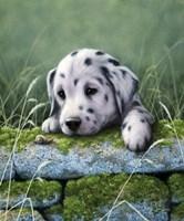 Dalmatian Pup Fine Art Print