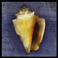 Fighting Conch Framed Print