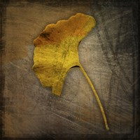 Gingko 1 Framed Print