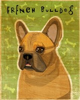 French Bulldog Fawn Fine Art Print