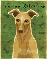Italian Greyhound - Fawn Fine Art Print