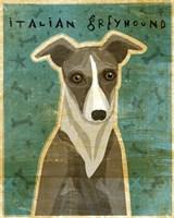 Italian Greyhound - White and Grey Fine Art Print
