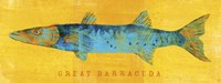 Great Barracuda Framed Print