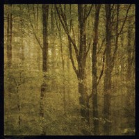 Fog in Mountain Trees No. 2 Fine Art Print