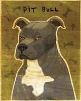 Pit Bull (Gray) Framed Print