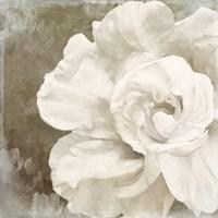 Petals Impasto II Framed Print