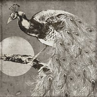 Moon Peacock Framed Print