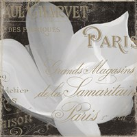 Fleurs Blanc II Fine Art Print
