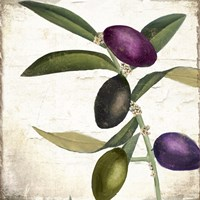 Olive Branch II Framed Print