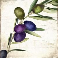 Olive Branch III Framed Print