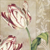 Peppermint Tulips I Framed Print