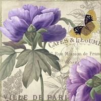 Petals of Paris IV Framed Print