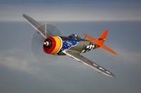 A Republic P-47D Thunderbolt Fine Art Print