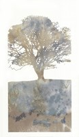 Water Tree II Framed Print
