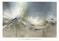 Beachside Daisies Fine Art Print