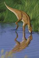 Hypsilophodon Fine Art Print