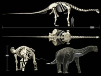 Anatomy of a Titanosaur Fine Art Print