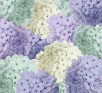 Hortensia Groundless Cool Tones Framed Print