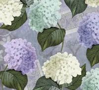 Hortensia Lavenders Framed Print