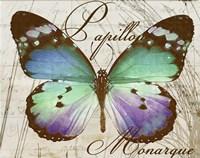 Papillon I Framed Print