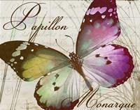 Papillon II Framed Print