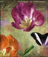 Aubergine Peony Framed Print