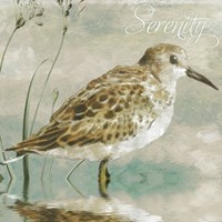Sand Piper I Framed Print