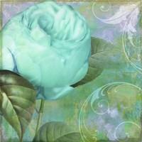 Aqua Rose I Fine Art Print