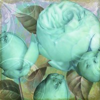 Aqua Rose II Framed Print
