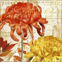 Chrysanthemes I Fine Art Print