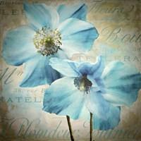 Himalayan Blue I Framed Print