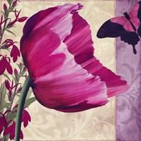 Pink Poppy II Framed Print