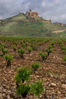 Vineyard in stony soil with San Vicente de la Sonsierra Village, La Rioja, Spain Fine Art Print