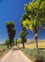 Pilgrimage Road, El Camino de Santiago de Compostela, Castile, Spain Fine Art Print