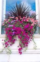 Flower Box in London, England Fine Art Print