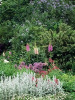 Nash Garden, St James Park, London, England Fine Art Print