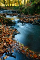 Stream with Autumn Leaves, Forest of Dean, UK Fine Art Print