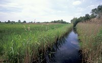 Wicken Fen, Cambridgeshire, England Fine Art Print