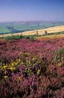 Cosgate Hill, Exmoor, Devon, England Fine Art Print