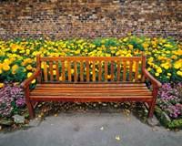 England, Northumberland, Hexham, Park bench Fine Art Print