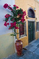 Bougenvillia Vine in Pot, Oia, Santorini, Greece Fine Art Print