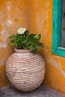 Flower in pot, Crete, Greece Fine Art Print
