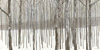 Woods in Winter Fine Art Print