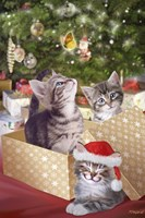 Kittens and Butterfly Under The Tree Fine Art Print
