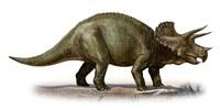 Triceratops Dinosaur 6 Fine Art Print