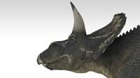 Triceratops Dinosaur 4 Framed Print