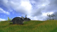 Triceratops Walking across Prehistoric Grasslands Fine Art Print