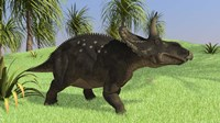 Triceratops Walking in Open Field Fine Art Print
